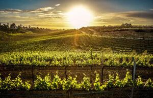 Temecula Winery Tours @ Community Center